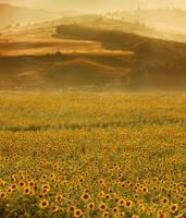 Solar Seeds by borda