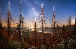Moonrise Kingdom IV by borda