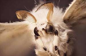 The Gremlin Moth by borda