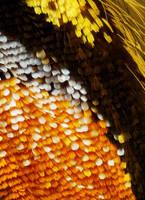Butterfly Wing Wallpaper by borda
