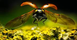 Ladybug Descent by borda