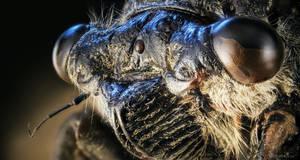Cicada - a true alien portrait by borda