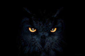 Haunting kitty eyes by borda
