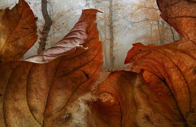 Rusty Flames by borda