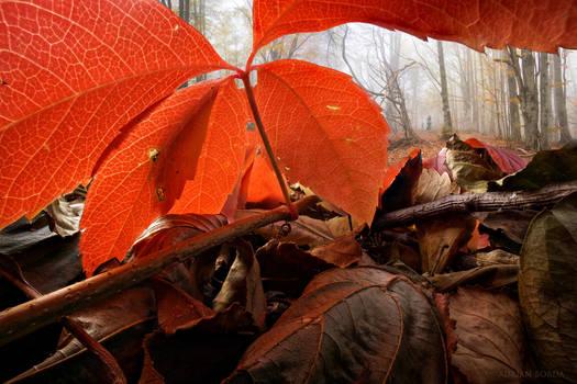Under The Red Umbrella by borda