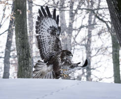 Hunting high and low by borda