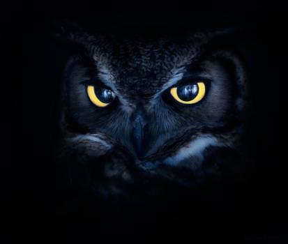 Haunting Kitty Eyes II by borda