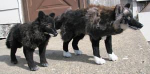 Black Wolf Comparison by Jarahamee