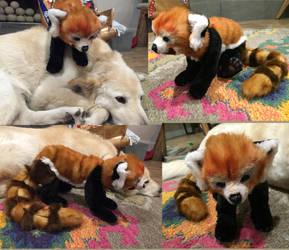 Red Panda Realistic Plush by Jarahamee