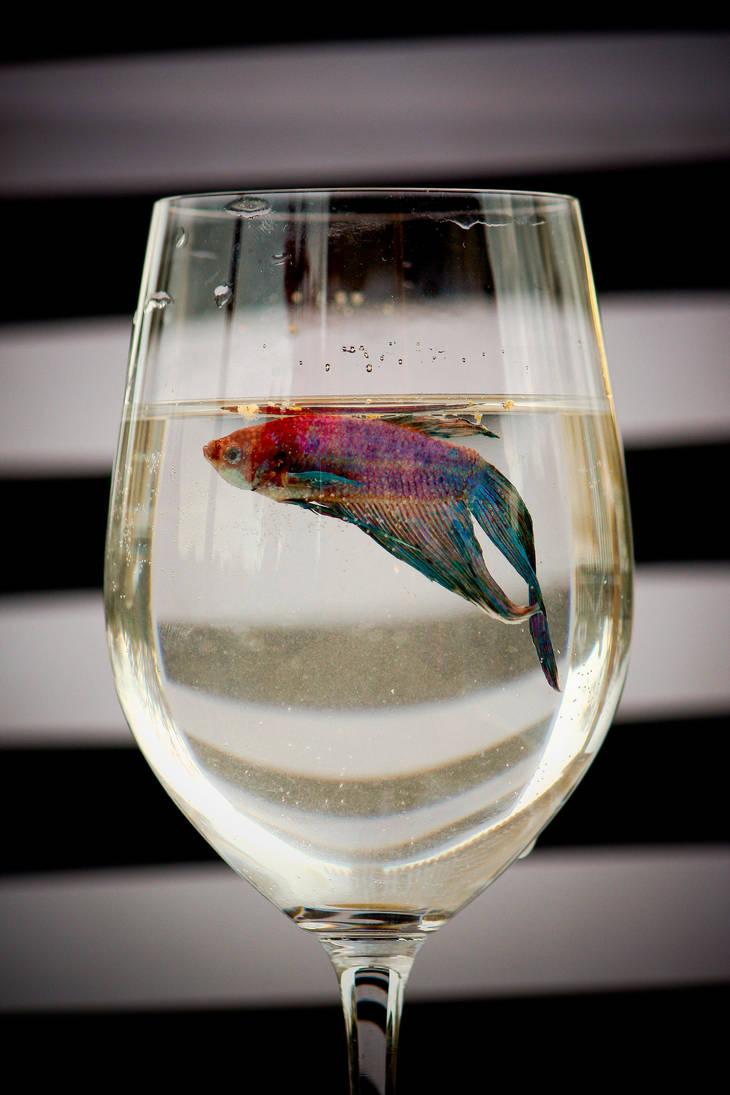 A Fish of Finer Things by Daidaiiro-kun