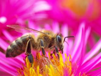 Bee by loozak84