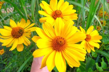 Yellow flowers v2 by loozak84