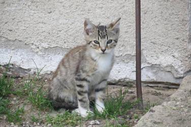 Cat by loozak84