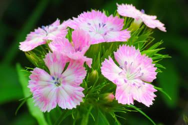 Little flowers macro by loozak84