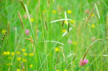 Meadow by loozak84
