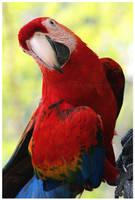 Pretty Bird by Doubtful-Della