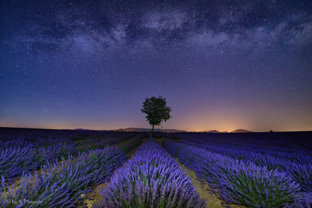 Lavender at Night by redkojimax