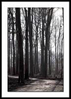 Grey Path by TheWizardRod