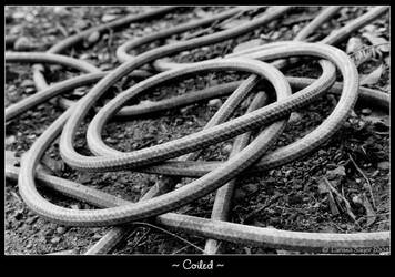 Coiled by rissdemeanour