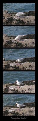 Seagull vs. Starfish by rissdemeanour