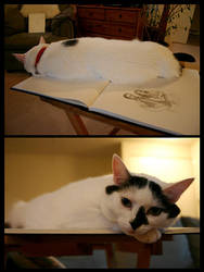 Jersey and the Sketchbook by rissdemeanour