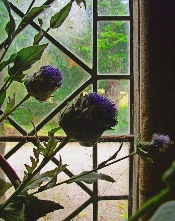 Plants Stock - Thistle by Quadraro
