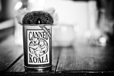 canned koala by wronislawa