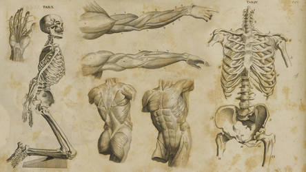 1700's Anatomy Wallpaper by JasonMonteCarlo