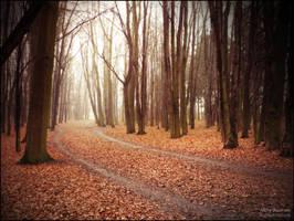 Misty Journey by WojciechDziadosz