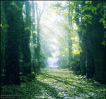 Serenade of Autumn by WojciechDziadosz