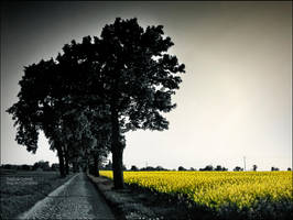 Yellow Land by WojciechDziadosz