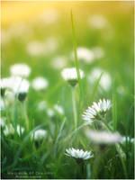 Meadow of Dreams by WojciechDziadosz