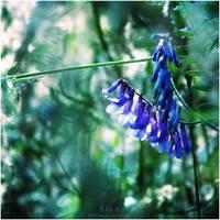 Blue. by WojciechDziadosz