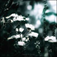 Deep in grass by WojciechDziadosz