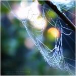 Colours of the morning by WojciechDziadosz