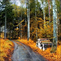 Autumn forest by WojciechDziadosz