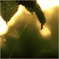 Don't cry by WojciechDziadosz