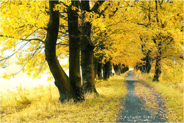 Autumn trees by WojciechDziadosz