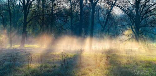 Forest Spirits by WojciechDziadosz
