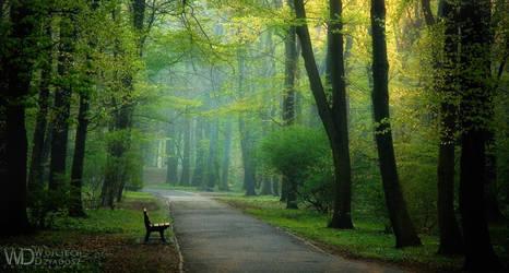 Morning walk by WojciechDziadosz