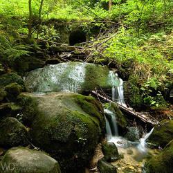 Whispering Forest by WojciechDziadosz