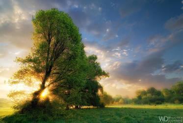 The sun also rises by WojciechDziadosz
