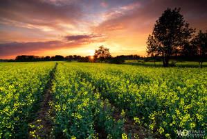 Spring sunset by WojciechDziadosz