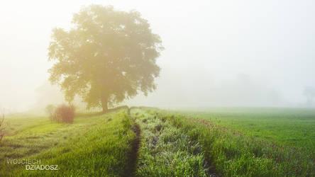 Lonely Walk In The Morning by WojciechDziadosz
