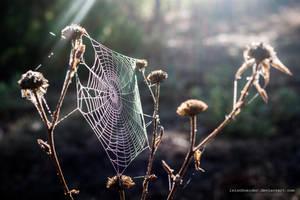 morning light by isischneider