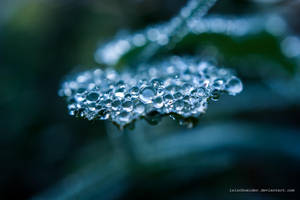 Covered With Dew by isischneider