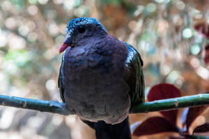 Emerald Dove by isischneider
