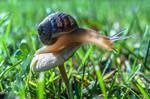 Snail On Mushroom by isischneider