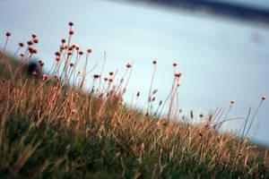 summer grass by bitstarr