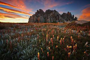 Wild Flower by timbodon